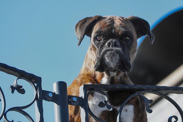 Les lois de protection animale