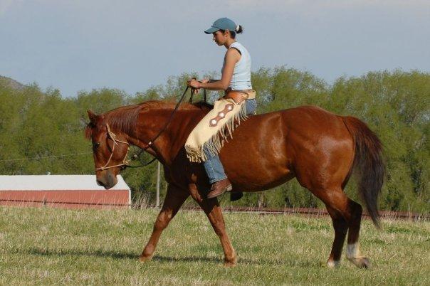 L'équitation éthologique: définition et application