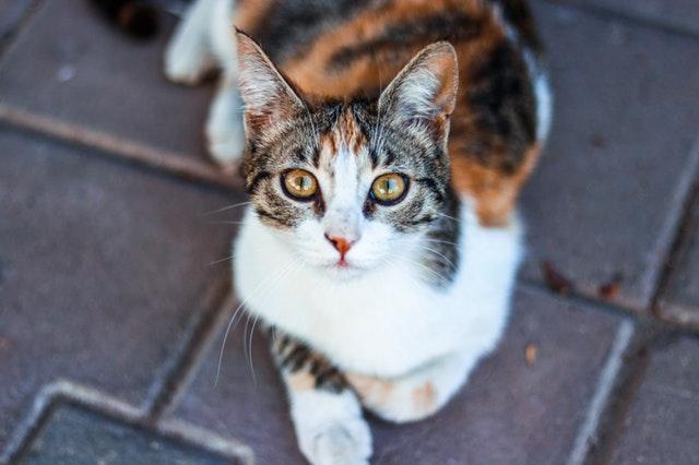 Adopter un chat: où se rendre et comment faire?