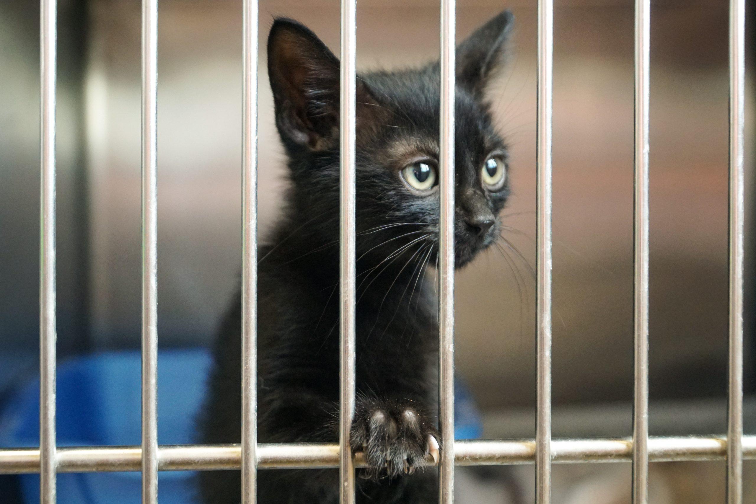 Adopter un chat en refuge