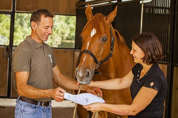 Acheter un cheval - Les dépenses à prévoir