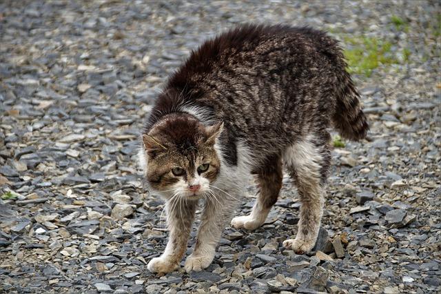 Les émotions du chat: le gros dos