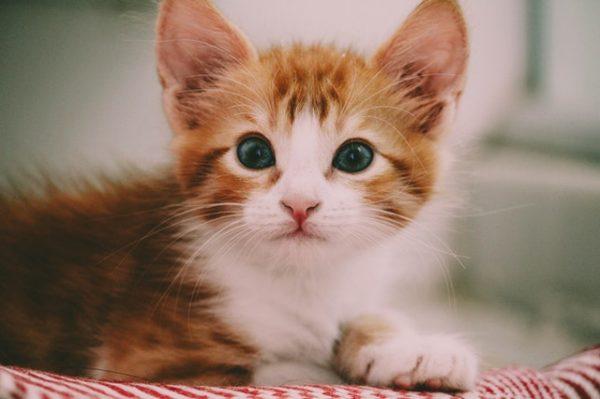 Quel nom de chat en R choisir en 2020?