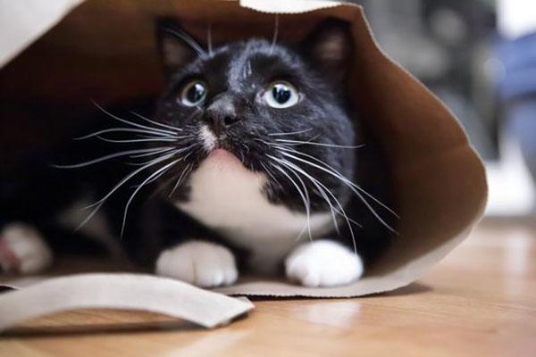 Comment les émotions du chat s'expriment-elles?