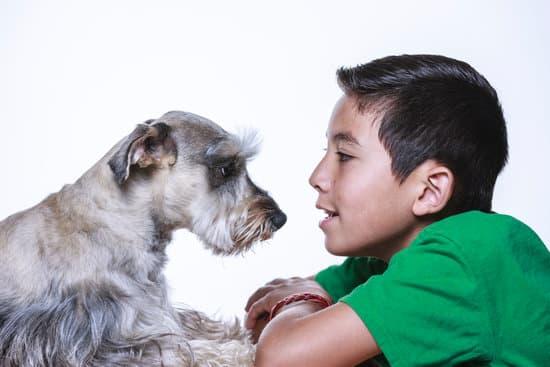 10 choses que les chiens détestent