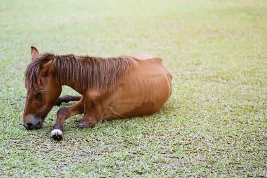 SIgnaler un cas de maltraitance sur un cheval