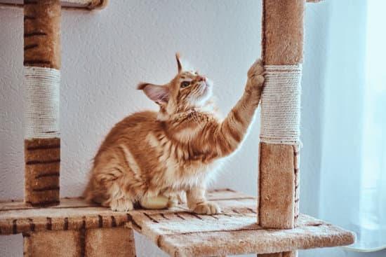 Les griffades du chat