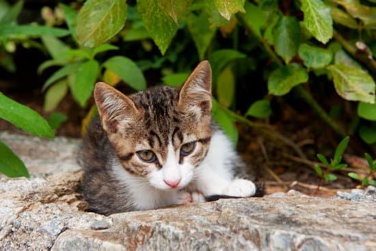 Campagnes de stérilisation des chats