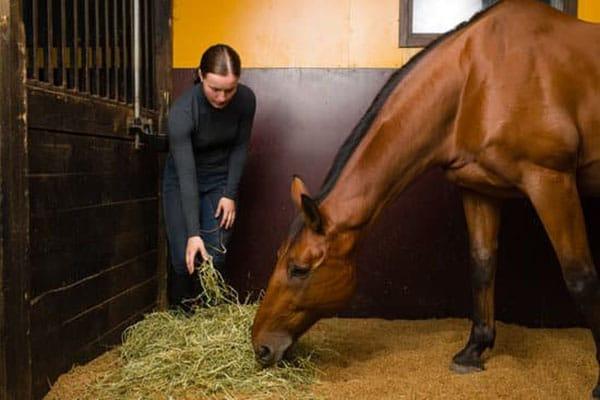 Bien nourrir son cheval: tout ce qu'il faut savoir