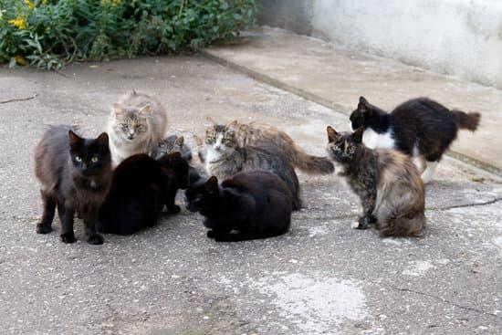 Population de chats errants