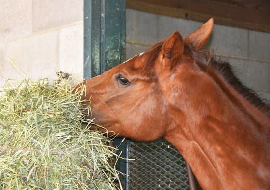 Le fourrage, base de l'alimentation du cheval