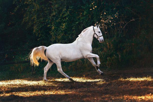 Les 75 plus belles citations sur les chevaux