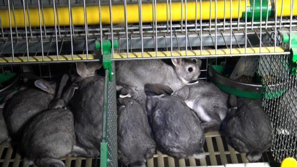 Interdiction de l'élevage en cage