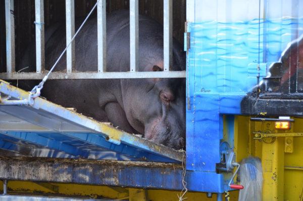 Interdiction des animaux sauvages dans les spectacles
