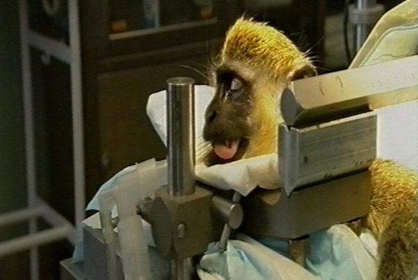 Interdiction de l'expérimentation animale