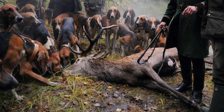 Interdiction de chasse à courre