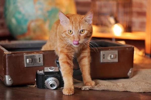 3 moyens de faire garder son chien et son chat pendant les vacances