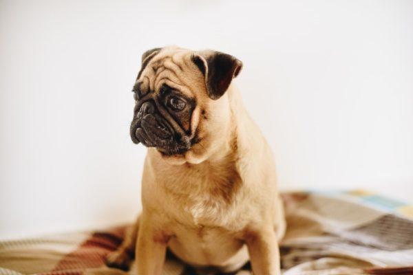 10 conseils pour gérer l'anxiété chez le chien